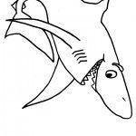 tiburon-3
